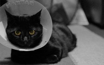 What Happens During My Pet's Neuter Surgery?